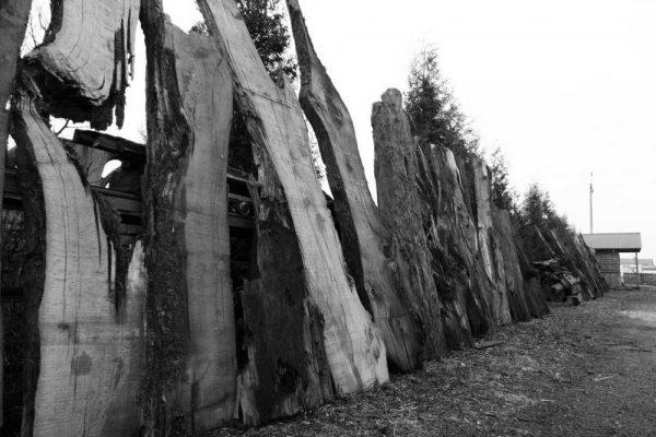 troncos-wonderwall